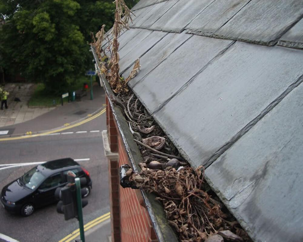 Why It's Important to Clean Gutters Regularly