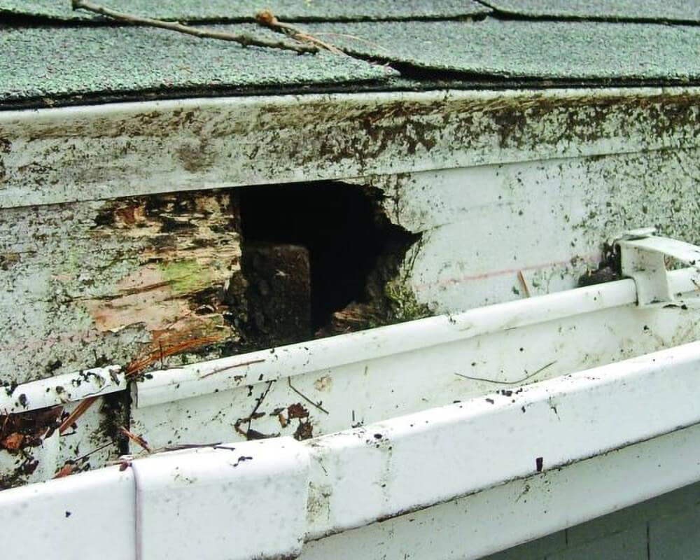 5 Ways Blocked Gutters Can Damage Your Home